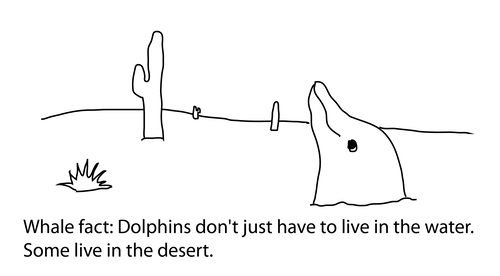 whale fact: Dolphins don't just have to live in the water. Some live in the desert. Drawing is of a dolphin emerging from the sand, looking out at all the cactus around.