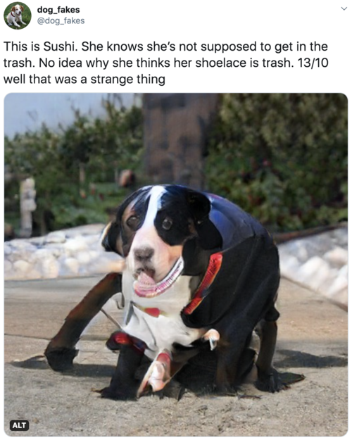 This is Sushi. She knows she's not supposed to get in the trash. No idea why she thinks her shoelace is trash. 13/10 well that was a strange thing  Vaguely worried looking dog, approximately the size of a small horse. Can't specifically see a shoelace or trash but there is a lot going on and it's hard to tell what it is