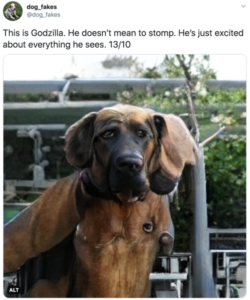 This is Godzilla. He doesn't mean to stomp. He's just excited about everything he sees. 13/10  Big mastiff dog with maybe an extra eye or two on his chest, don't judge