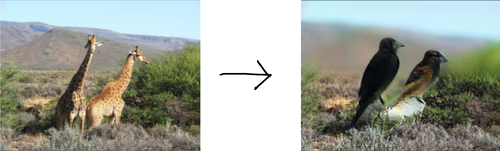 Left: two giraffes with a dry mountainscape in the background and sagebrush in the foreground  Right: two birds in approximately the same position that the giraffes were in. Most of the sagebrush is still there, but the background is blurred.