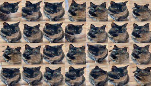 A sequence of generated cats. They're definitely similar views of the same tortoiseshell cat, but one of them has two pupils in one eye, one of them has a long doglike nose and a blurred body, and some of them look pretty all right actually, although something's funny about the whiskers.